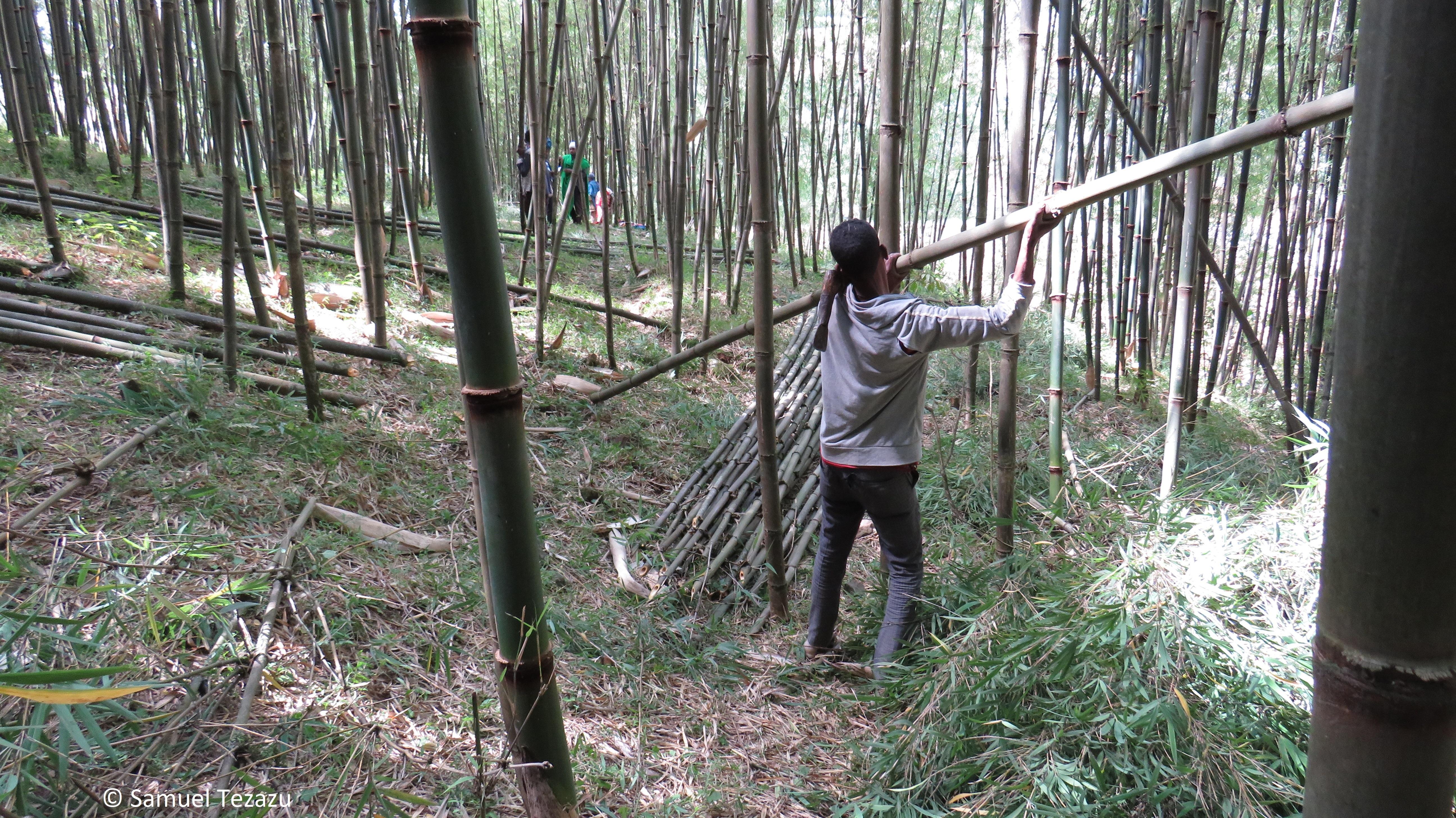 Arbeiter trägt Bambusstange