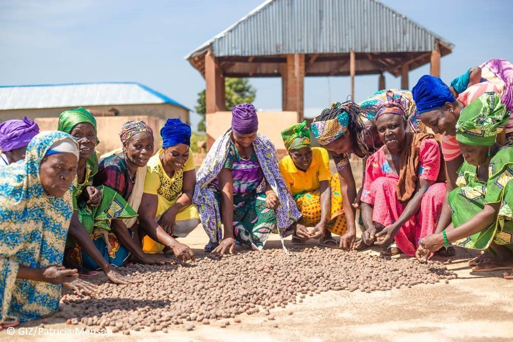 Women's group in Ghana collects nuts