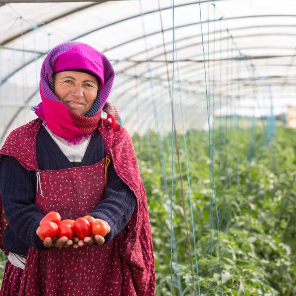 Femme en serre détient des tomates