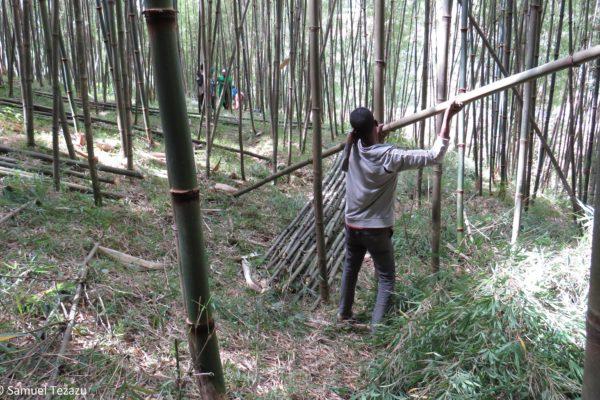 Production de lits en bambou pour centres de santé