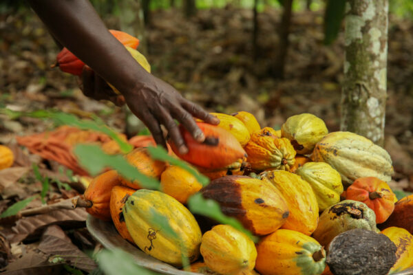 Webinar series on the new EU-organic regulation for companies in Africa