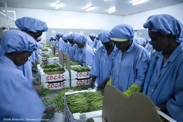 Sénégal : Lancement officiel du 1er appel à projets IFE